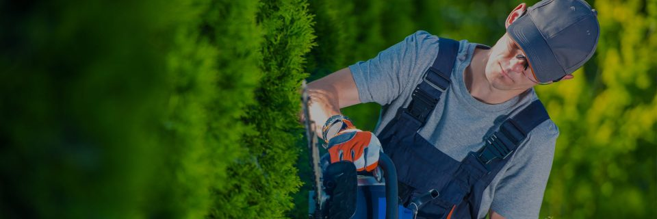 Ландшафтное строительство участка — доверьте профессионалам!