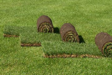 Цены на рулонный газон