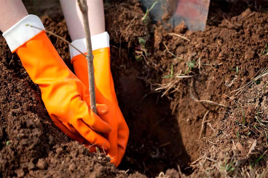Посадка растений осенью: преимущества