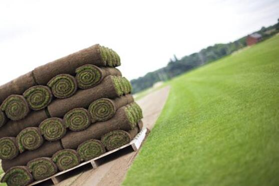 Как ухаживать за рулонным газоном после укладки